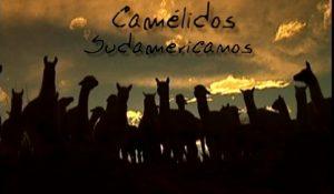 La Buena Tierra: Camélidos Sudamericanos